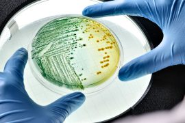Live bacteria 'program' for scientists to store data |  Science